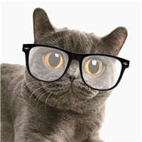 戴眼镜的照片