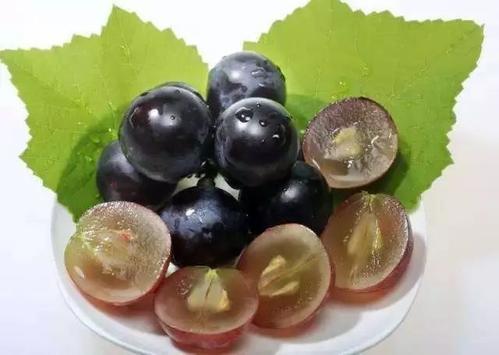 葡萄籽代加工德州健之源