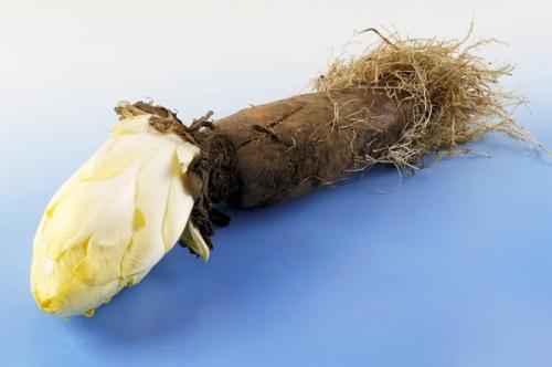 药食同源之菊苣保健食品代加工德州健之源