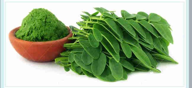 保健食品OEM代加工项目_辣木叶的功效与作用_德州健之源