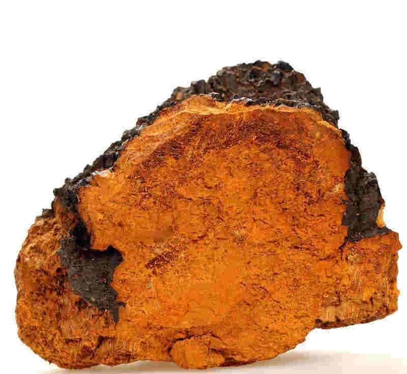 桦褐孔菌的功效与作用_压片糖果OEM代加工_德州健之源