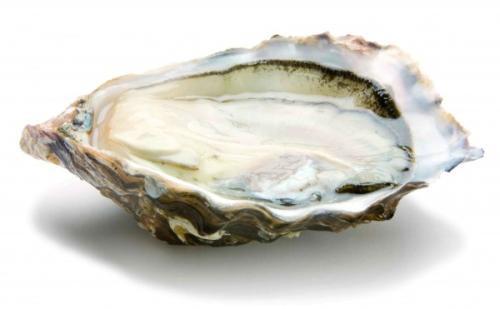 牡蛎图片-德州健之源